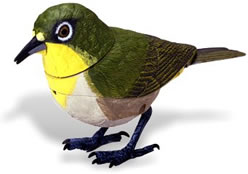Japanese white eye singing animated bird.
