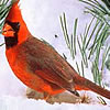 Red cardinal breezy singer.