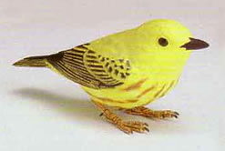 Singing yellow warbler bird.
